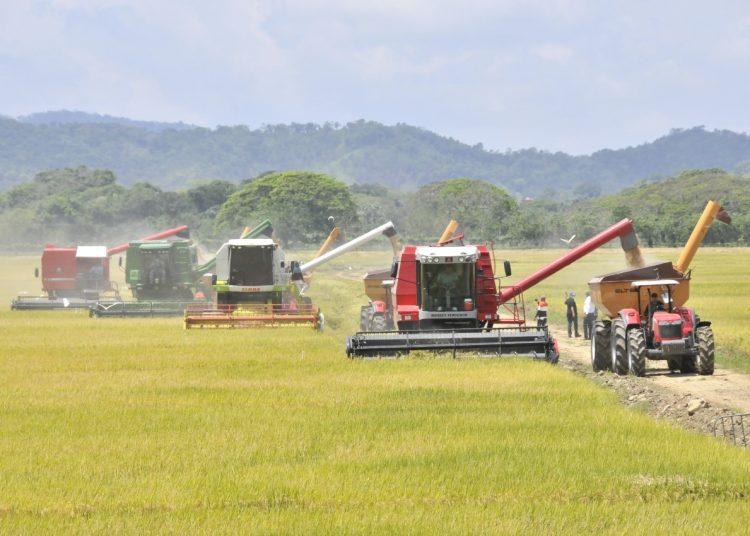 Agricultura, Limber Cruz,