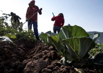 Agricultura, agricultores