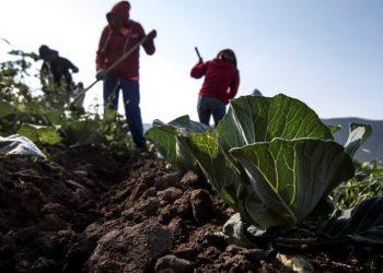 Por sectores de actividad, el grupo de actividades agrícolas fue el único que mostró un comportamiento positivo, con un crecimiento del 6.3% con respecto a febrero de 2020. | EFE.