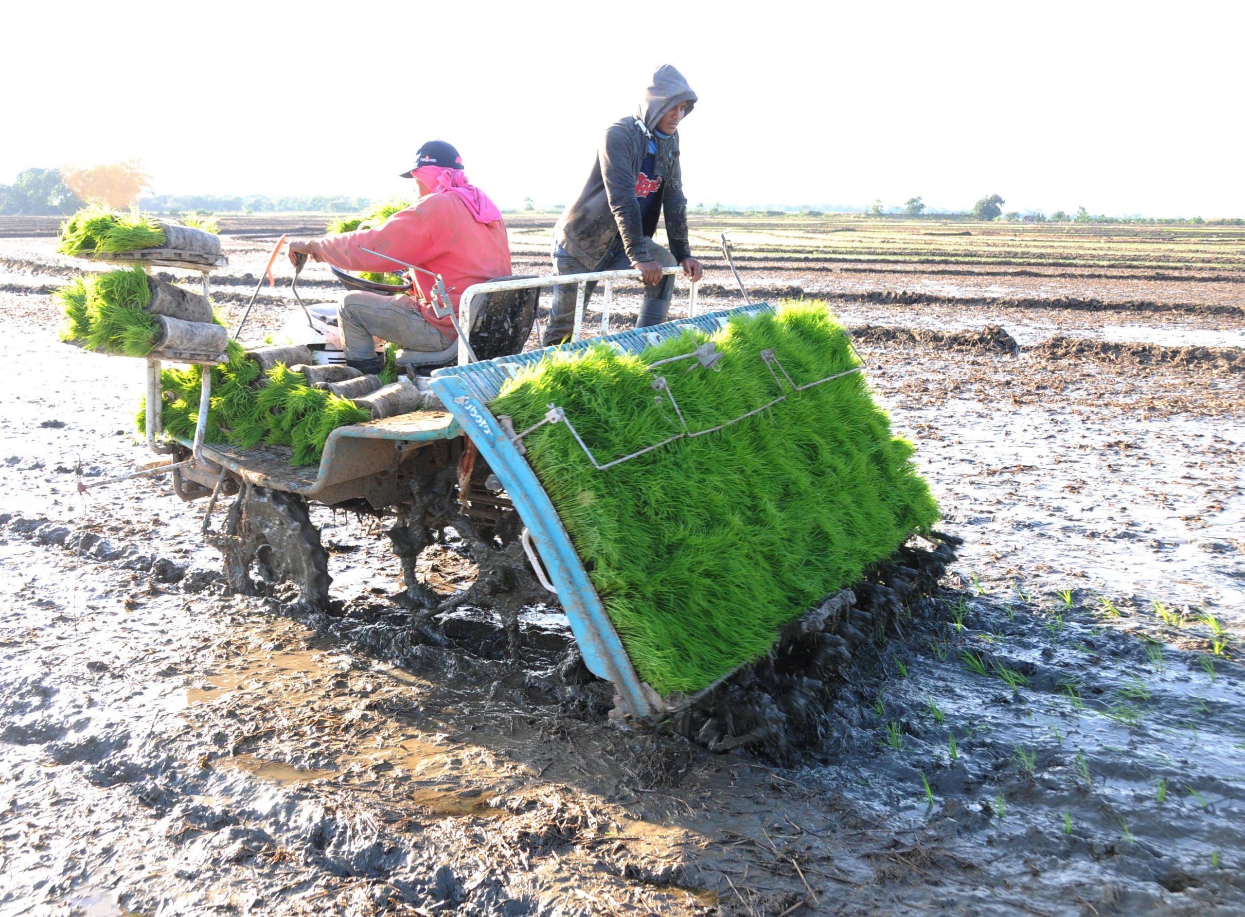 Expertos estiman que los efectos del cambio climático se sentirán con mucha fuerza en la producción agrícola.