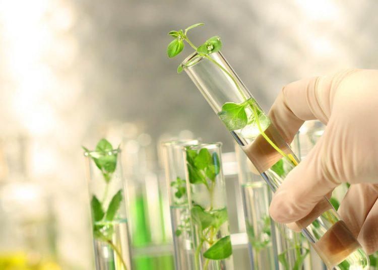 Biotecnología agrícola. | Trichodex.