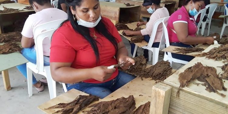 Capacitación de mujeres en la confección de tabaco por la empresa Tabacos Vega del Rey, la primera que se instalará en el parque Zona Franca Industrial de Cotuí.
