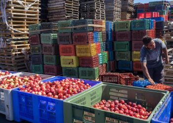 Comercio agrícola