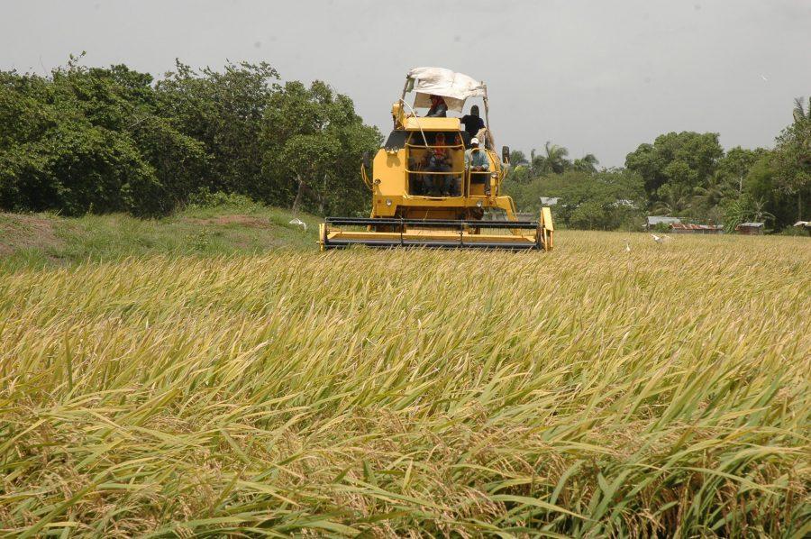 El ministro Ángel Estévez dijo que se está cumpliendo con los parámetros para una producción de calidad.
