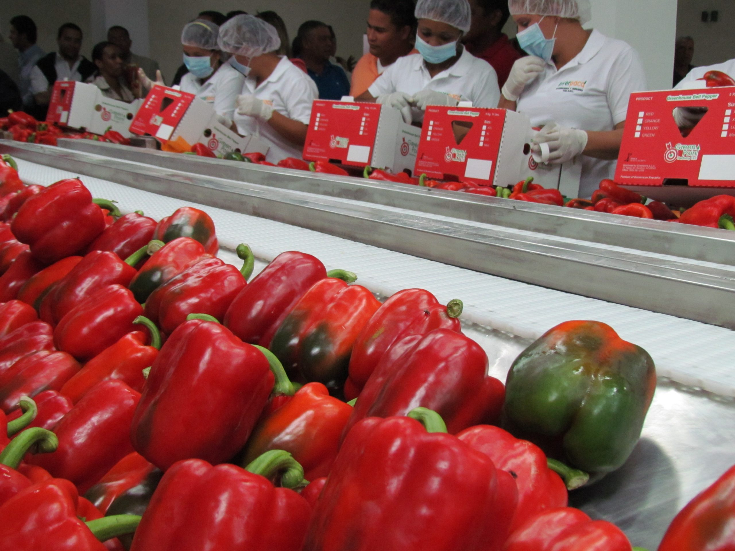 El país ha ganado un gran espacio en el mercado mundial con los invernaderos. Foto: Jairon Severino