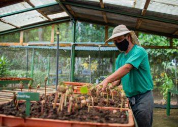 """El proyecto """"Un futuro para la Sierra"""", es un trabajo en conjunto con La Loma Macadamia, el Consorcio Ambiental Dominicano y el sector privado para disminuir la degradación ambiental de la Sierra, un ejemplo de cómo las alianzas público-privadas son una estrategia favorable para la preservación de la biodiversidad."""