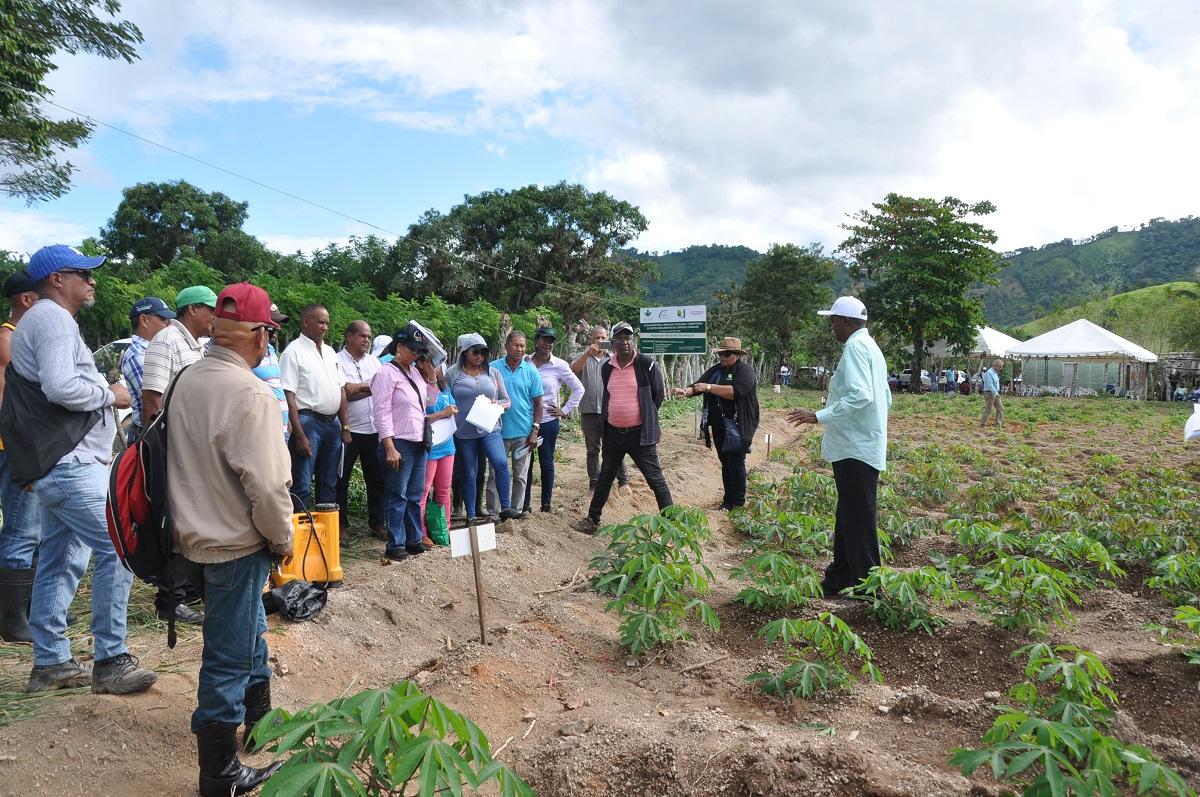 yuca productores