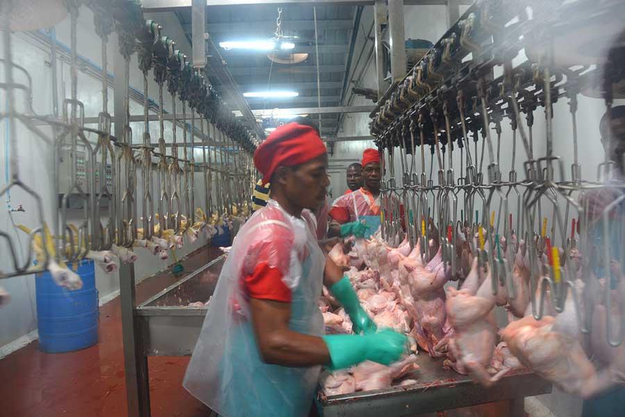 agrocupecuaria avicultura