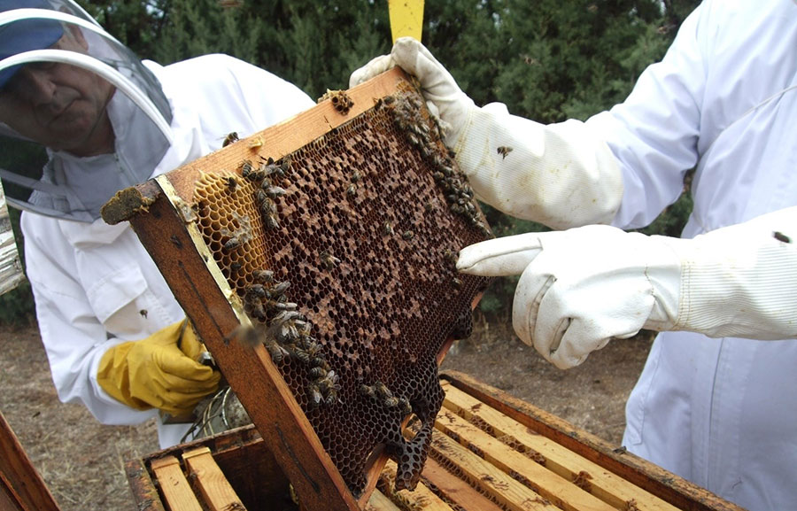 La vestimenta utilizada por los apicultores debe ser resistente y cubrir todo el cuerpo.