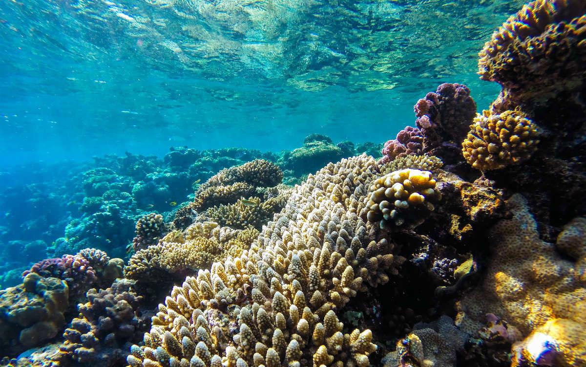 arrecifes de coral caribe
