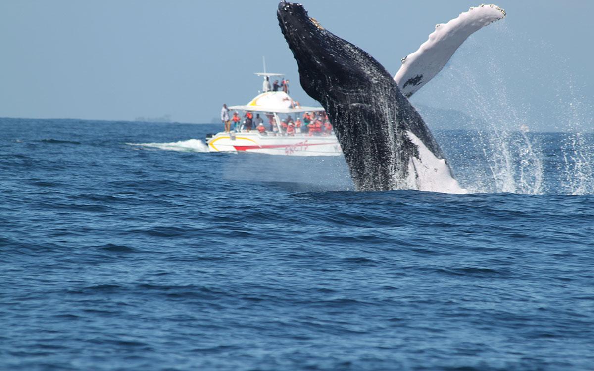 ballenas jorobadas mamiferos marinos