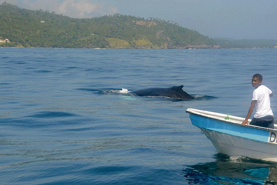 El acceso para la observación de las ballenas es gratis, aunque es preciso pagar costos de transporte.