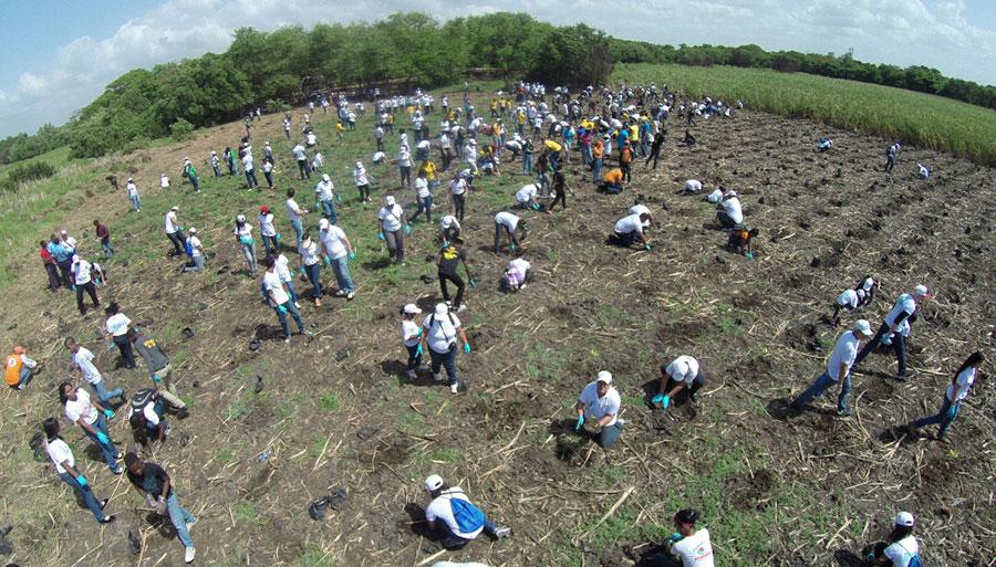 La siembra de mangalares se realiza en conjunto con varias entidades, comprometidas con la preservación de la biodiversidad.
