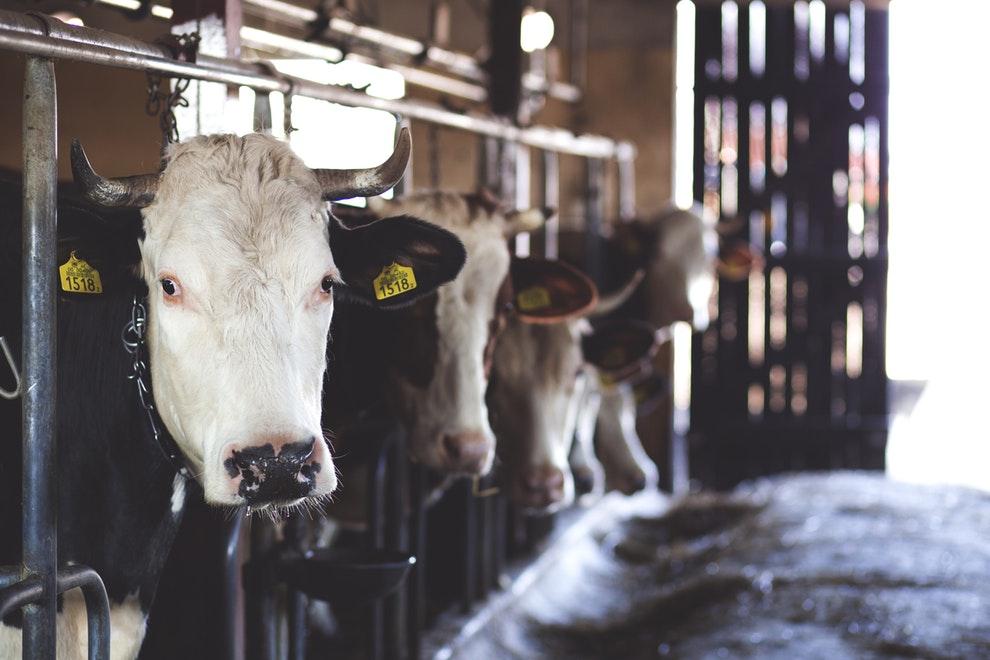 carne bovina brasil