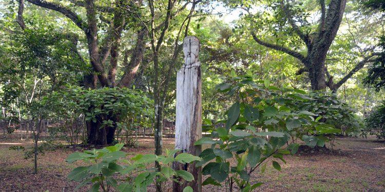 El Corredor Ecológico es una  iniciativa que aspira a constituirse como jardín botánico del Nordeste.