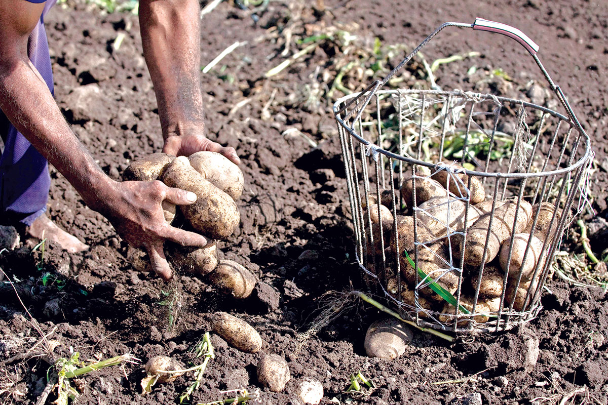ejecucion presupuestaria ministerio deagricultura