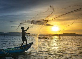 Pesca, acuicultura