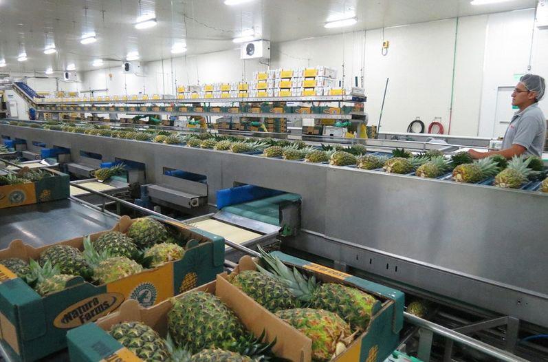frutas centroamerica