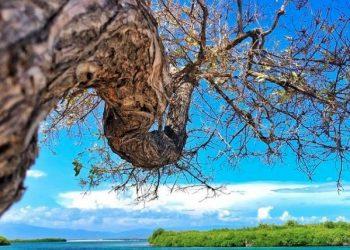 Las Caobitas, una playa virgen de arena blanca que está rodeada de  manglares y cayos.  / Foto:   Wabi Sabi Pics