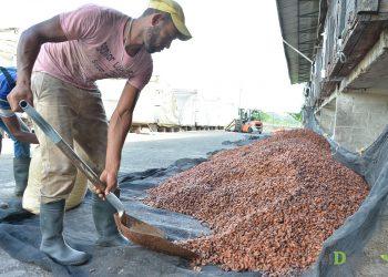 Organizar el mercado implica mejorar las condiciones de vida de las zonas rurales.
