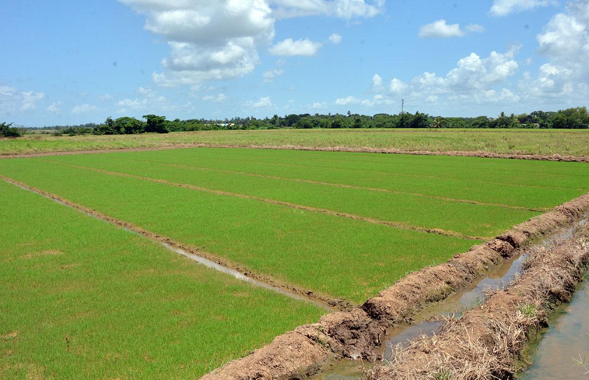 ruta turistica de arroz 2