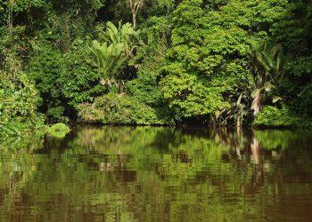 Parque Nacional Tortuguero, Costa Rica.   Pixabay.
