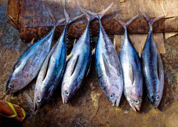 Atún, tuna